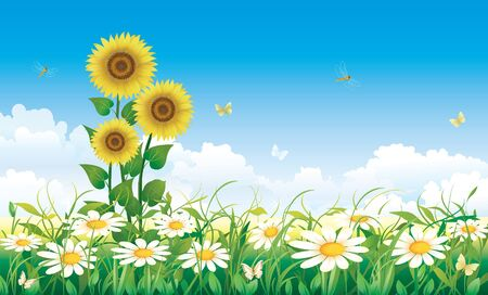 Summer meadow with daisies and sunflowers Vector