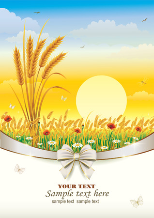corn poppy: natural landscape