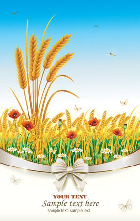 field of daisies: Postcard from the wheat field with poppies and daisies