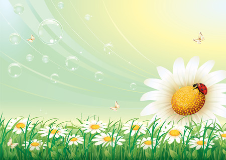 flowery: flowery meadow with daisies