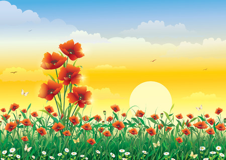 poppy field: Natural landscape. Poppy field at dawn Illustration