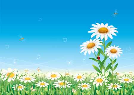 agriculture wallpaper: summer meadow with daisies