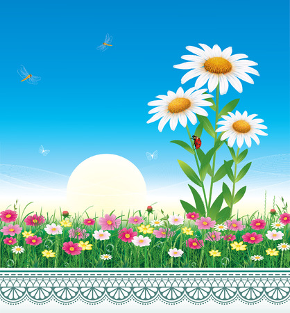 Flower meadow with daisies on a background of blue sky. Çizim