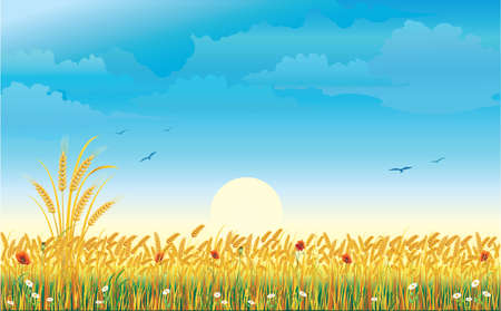 Summer landscape with a wheat field and flowers against background of the sky and sun. Vector illustration Vector Illustration