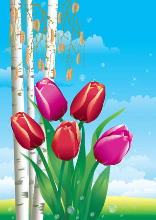 Greeting card with tulips on of birches. Vector Illustration