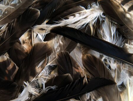 Feathers hawk - background of brown and speckled feathers, superimposed on each other