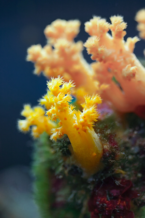 Wonderful and colorful underwater life in tropical sea photo
