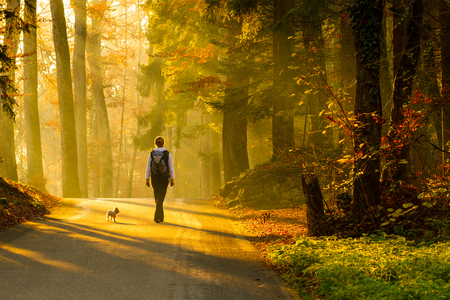 road autumnal: Rear view of young woman walking with dog on road through colorful autumn forest. Stock Photo