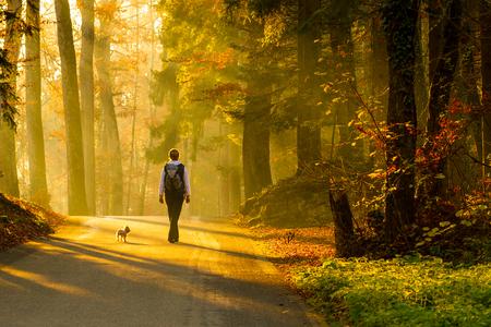 caminando: Vista posterior de la mujer joven que recorre con el perro en la carretera a trav�s de colorido bosque de oto�o.