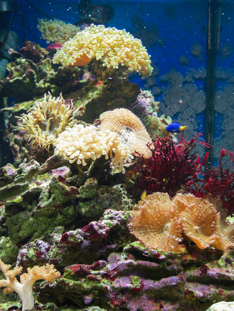 polyp corals: A bunch of various corals and other marine invertebrates in an aquarium.