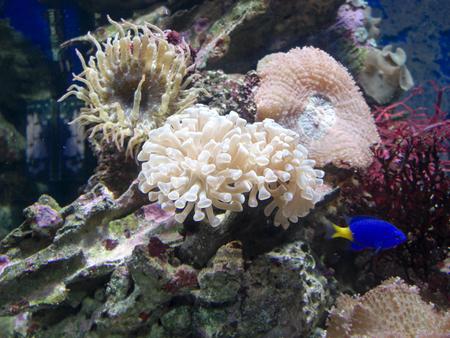 fishtank: Fish among corals and marine life in an aquarium.
