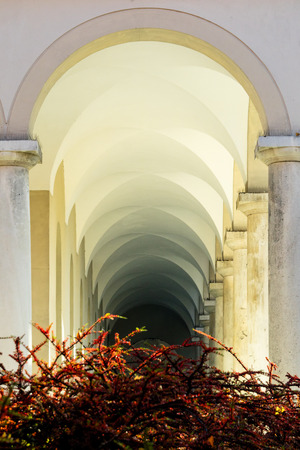 vaulted ceiling: Shrubs in front of arched corridor with cross type vaulted ceiling fading off into the distance