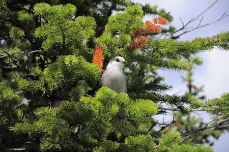 Bird  Banff National park  Canada