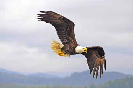 Eagle  British Columbia  Canada