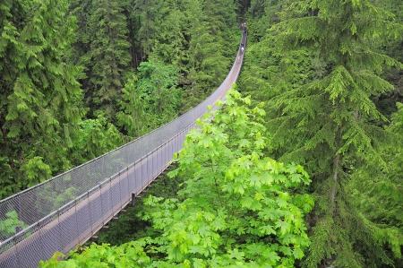 bridge in the forest: Capilano bridge  North Vancouver  Canada