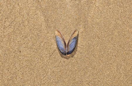 Shell on the ocean beach