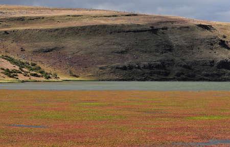 patagonian: Patagonian landscape