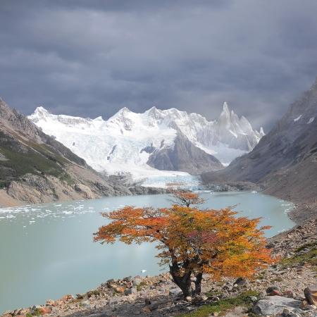 glaciares: Small tree by laguna Torre and Cerro Torre mountain  Los Glaciares National park  Argentina