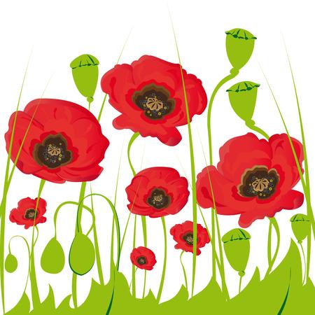 Poppy flowers  Illustration