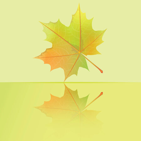 Autumn wet maple leaf fall to the puddle  Vector illustration