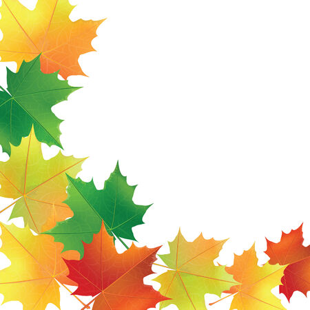 white greeting: Autumn leaves on the white Greeting card  Illustration