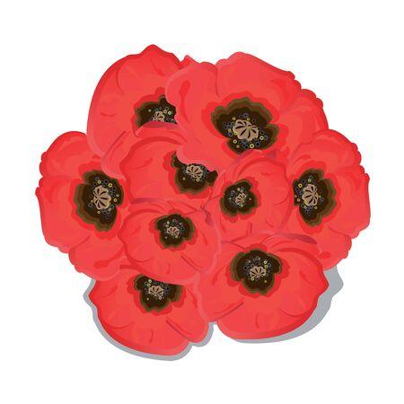 poppy flowers: Poppy flowers on white background. Vector illustration. Illustration