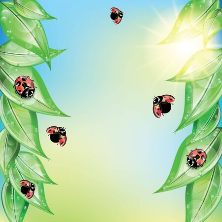 morning dew: Red ladybugs on the green leaves on the sky background.