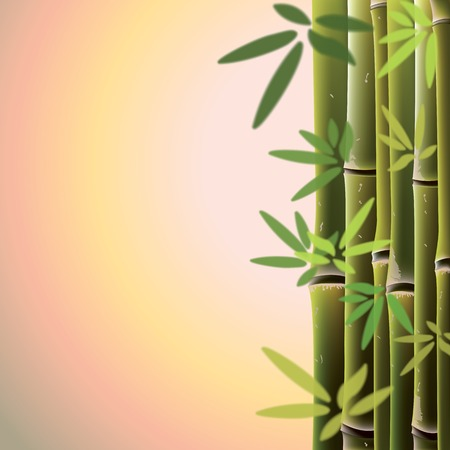 fengshui: Bamboo trees and leaves at sunste time. Vector illustration.