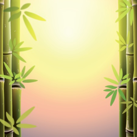 fengshui: Bamboo trees and leaves at sunset time. Vector illustration. Illustration