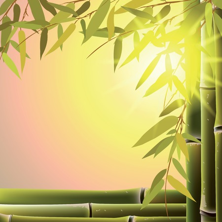 Bamboo trees and leaves at sunset time. Vector illustration. Çizim