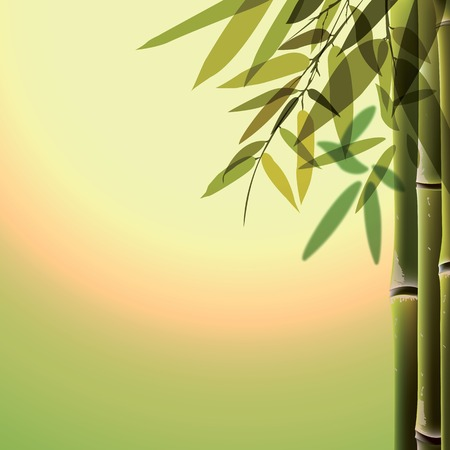 fengshui: Bamboo trees and leaves at sunset time.