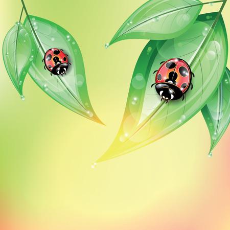 ochtend dauw: Rode lieveheersbeestjes op de groene bladeren na de regen op kleurrijke achtergrond.