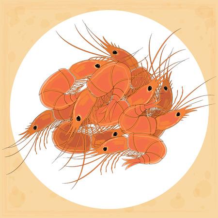 Prepared shrimp on the white plate. Vector illustration.