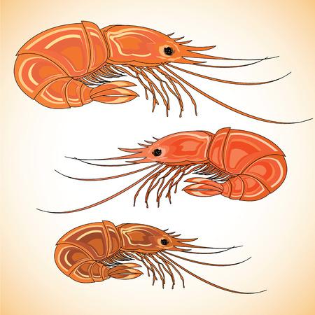 Three prepared shrimps on colorful background. Vector illustration. Illustration