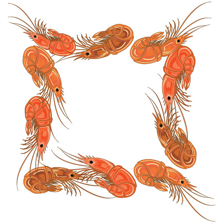 Frame made from prepared shrimps on white background. Vector illustration.