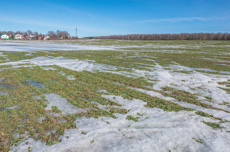 gramineous: Early spring view of the agricultural field under the snow. Stock Photo