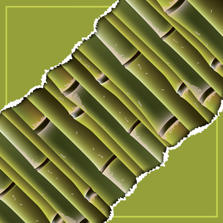 Bamboo branches under the torn paper. Vector illustration. Vector