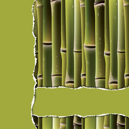 Bamboo branches under the green torn paper. Vector illustration. Vector