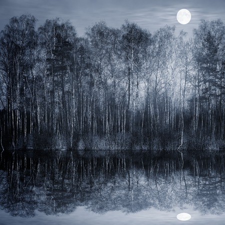 Night view of the forest by the lake.
