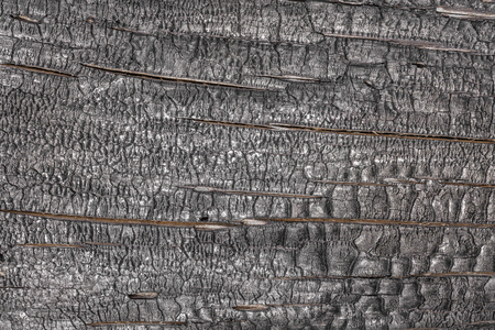 embers: View of the burnt wood black texture.