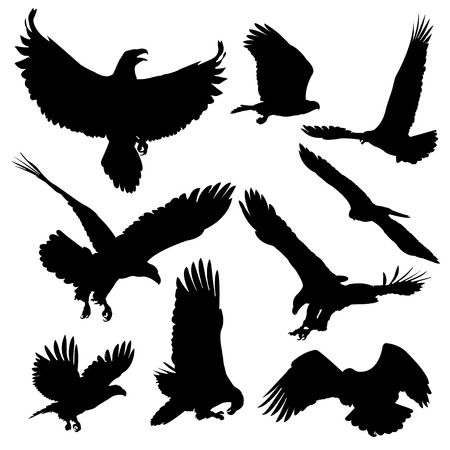 span: Bald eagles silhouettes isolated on white background. Vector illustration.