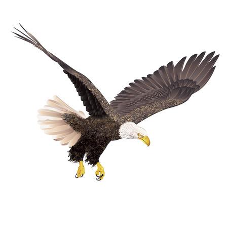 Bald eagle op een witte achtergrond. Vector illustratie. Stock Illustratie