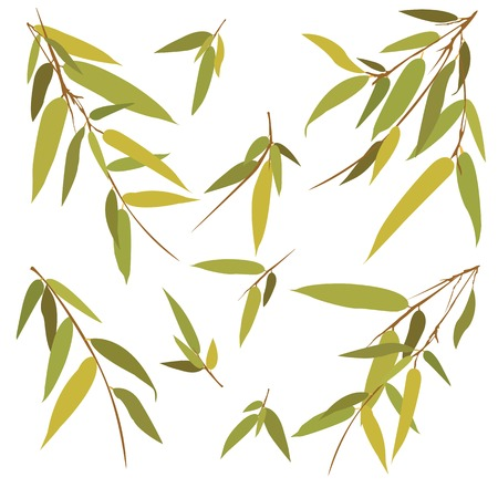 Bamboo branches isolated on white background. Vector illustration.