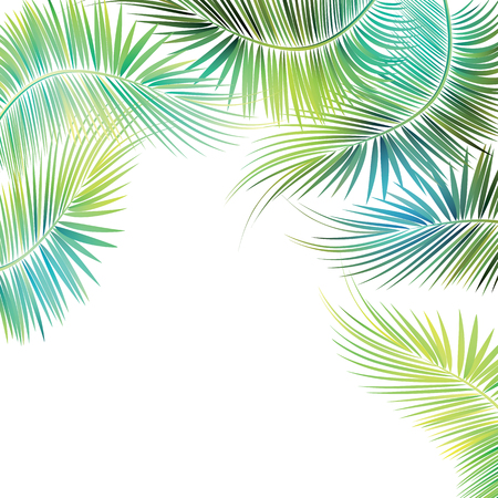 tropical evergreen forest: Palm tree branches on white background. Vector illustration. Illustration