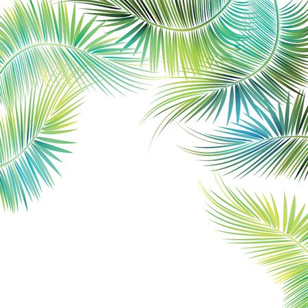 playas tropicales: ramas de los �rboles de palma en el fondo blanco. Ilustraci�n del vector.