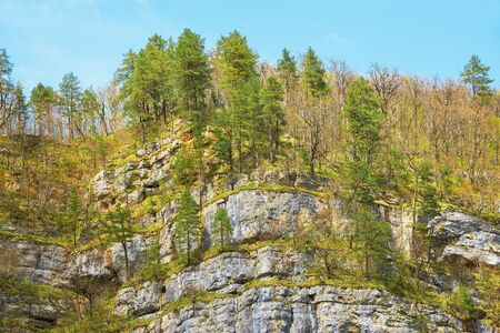 crack climbing: Pine trees on the edge of the gorge cliffs.