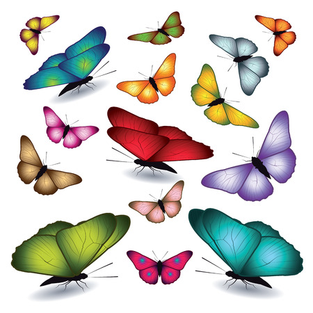 green butterfly: Set of butterflies isolated on white background. Vector illustration.