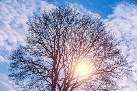 crone: Shining sun through the tree crone at evening time. Stock Photo