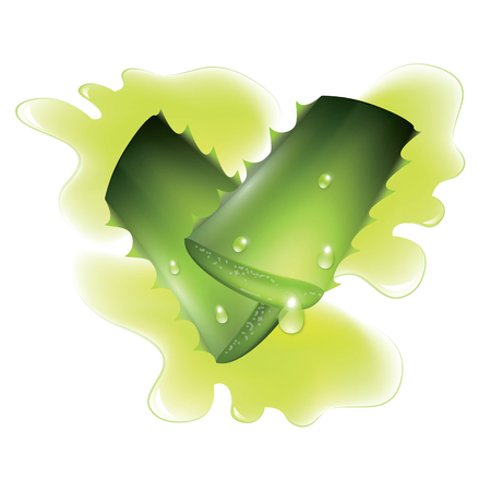 natural healing: Two cut pieces of aloe vera plants isolated on white background. Vector illustration.
