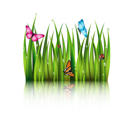 greensward: Flying butterflies by the grass with theirs reflection in the water.